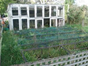 Overgrown half of vege garden