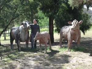 Tin Cows